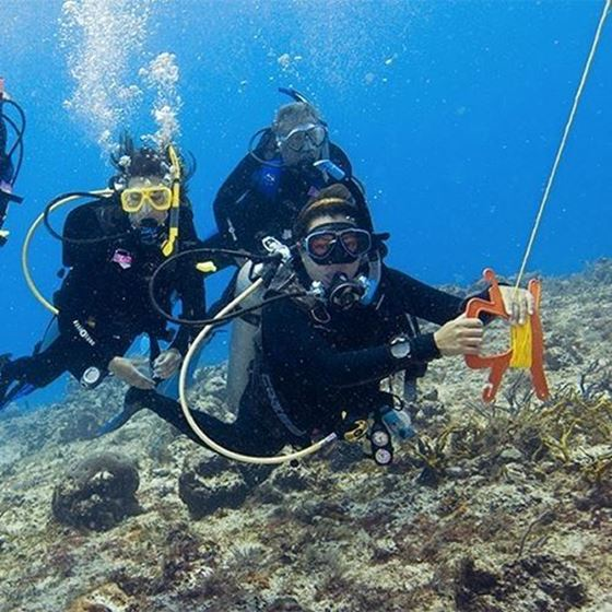 Picture of eLearning - Drift Diver