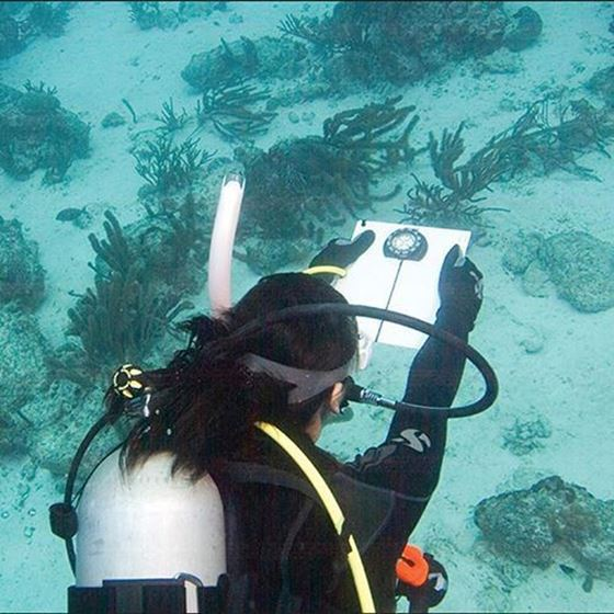 Picture of eLearning - Underwater Navigator